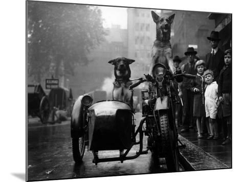 Daredevil Dogs--Mounted Photographic Print
