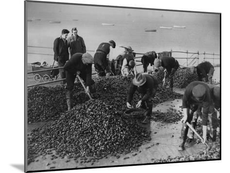 Mussel Catch--Mounted Photographic Print