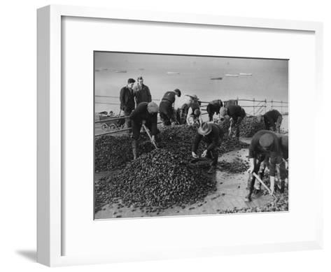 Mussel Catch--Framed Art Print