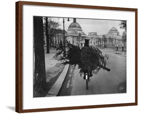 Family Tree--Framed Art Print