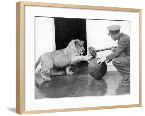 Lion Games--Framed Art Print