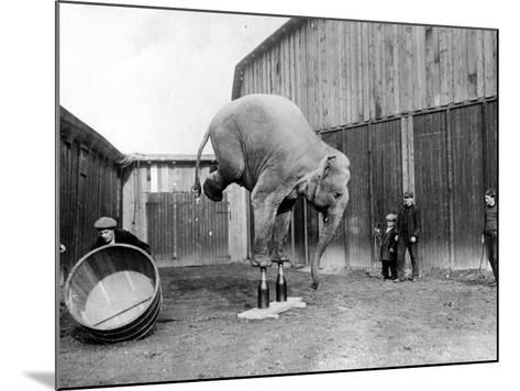 Circus Elephant--Mounted Photographic Print
