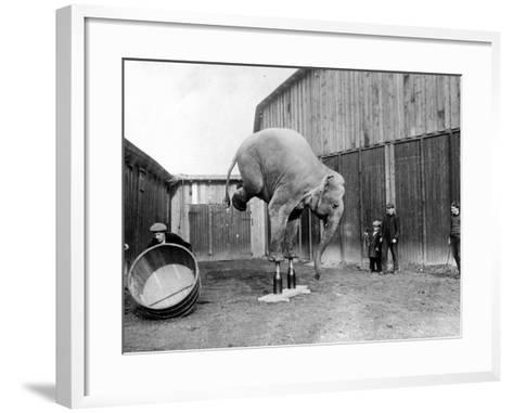 Circus Elephant--Framed Art Print