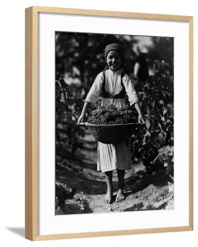 Grape Harvest--Framed Art Print