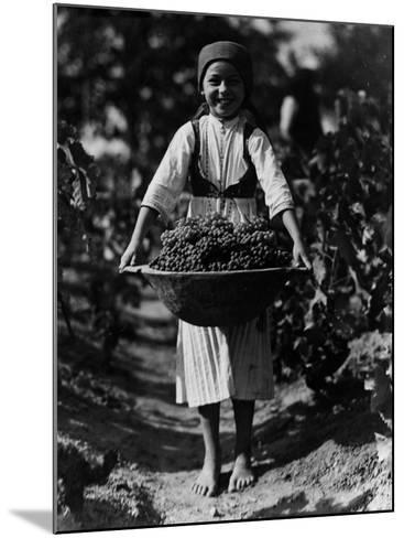 Grape Harvest--Mounted Photographic Print
