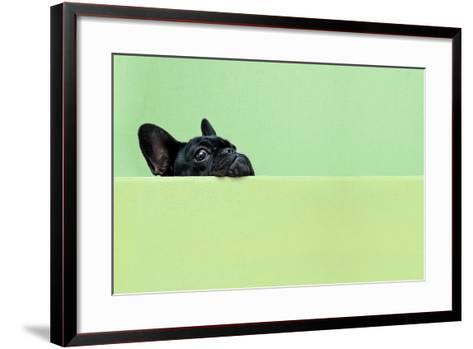 French Bulldog Puppy-retales botijero-Framed Art Print