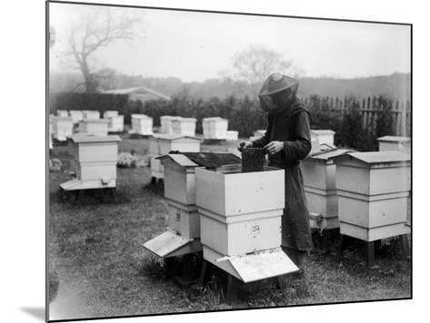 Beekeeping--Mounted Photographic Print