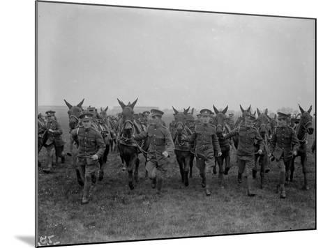 Army Mules--Mounted Photographic Print