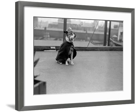 Police Dog--Framed Art Print