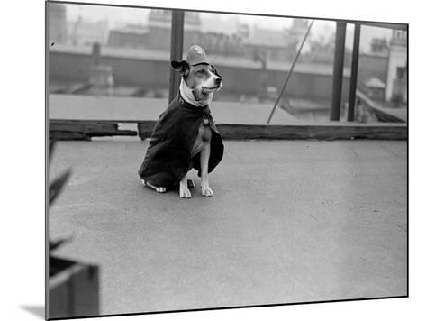 Police Dog--Mounted Photographic Print