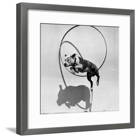 Performing Dog--Framed Art Print