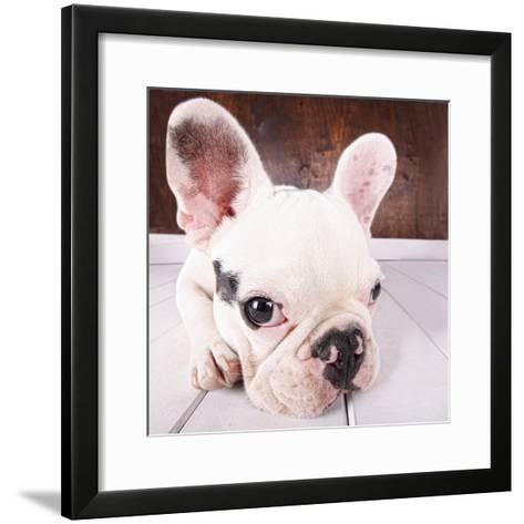 French Bulldog Puppy-MAIKA 777-Framed Art Print