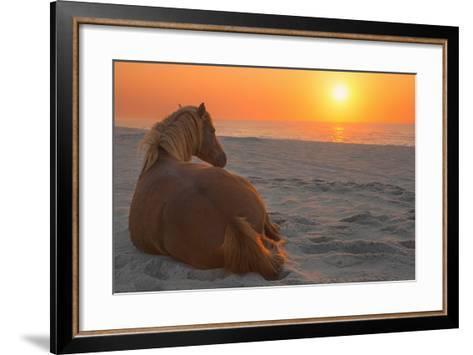 Wild Horse Sunrise-Image by Michael Rickard-Framed Art Print