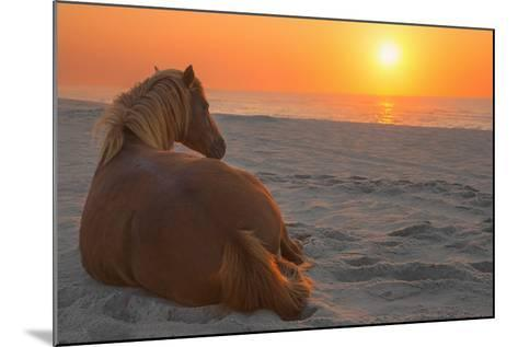 Wild Horse Sunrise-Image by Michael Rickard-Mounted Photographic Print
