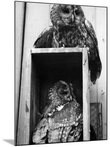 Owls Sleep--Mounted Photographic Print