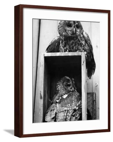 Owls Sleep--Framed Art Print