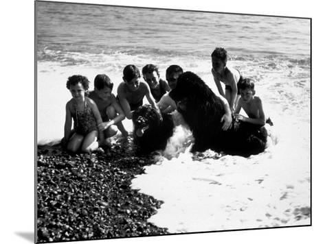 Sea Dogs--Mounted Photographic Print