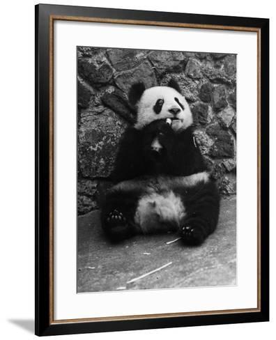 Panda Lunchtime--Framed Art Print