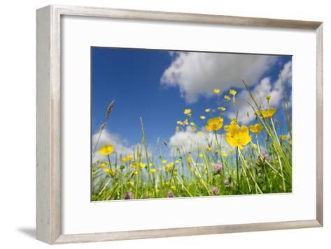 Meadow of Grass and Blooming Summer Buttercups under Blue Sky-Echo-Framed Art Print