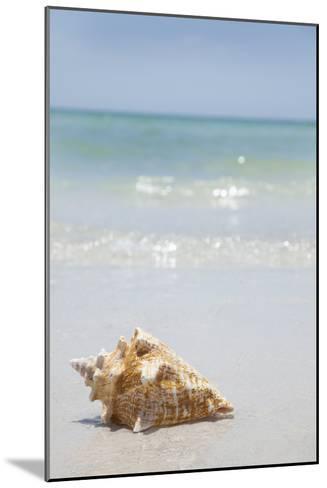 Usa, Florida, St. Petersburg, Conch Shell on Beach-Vstock LLC-Mounted Photographic Print