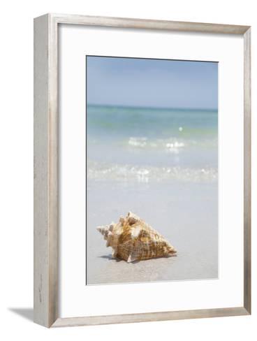 Usa, Florida, St. Petersburg, Conch Shell on Beach-Vstock LLC-Framed Art Print