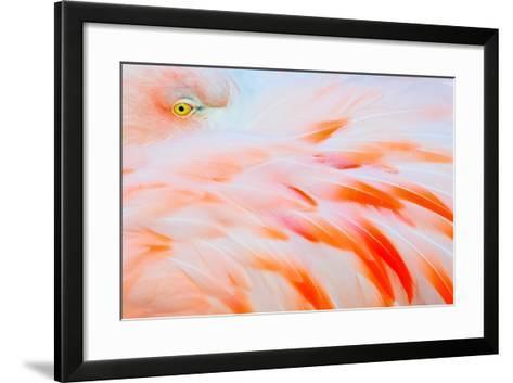 Flamingo-Tom Winstead-Framed Art Print