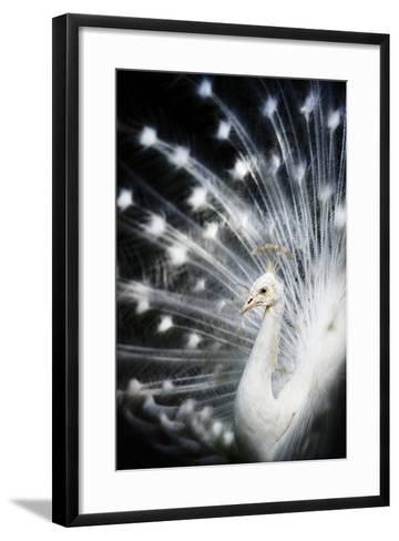 White Peacock-Copyright (c) Richard Susanto-Framed Art Print