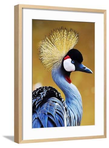 Exotic Bird-Eugenio Carrer-Framed Art Print
