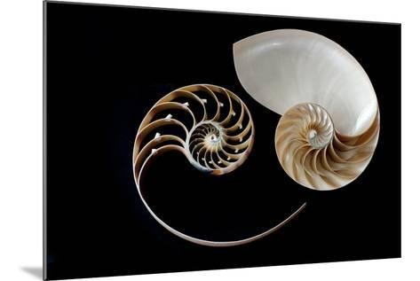 Nautilus Yin Yang-by ana_gr-Mounted Photographic Print