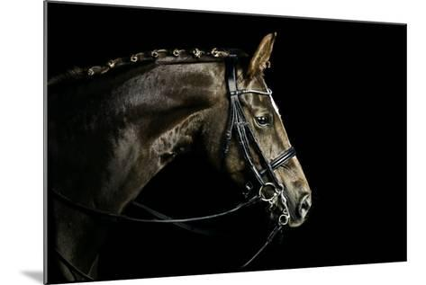 Chestnut Dressage Horse Groomed for a Contest-Anja Hild-Mounted Photographic Print