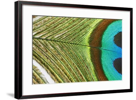 Close up of a Peacock Feather-Visage-Framed Art Print