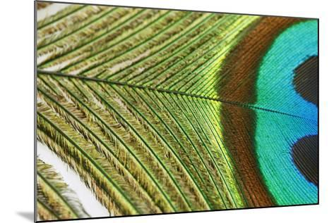 Close up of a Peacock Feather-Visage-Mounted Photographic Print