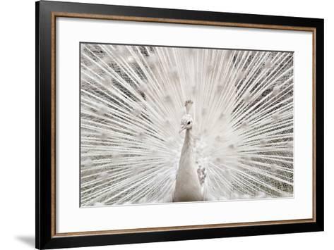 White Peacock, Lahore-pharan Tanveer-Framed Art Print