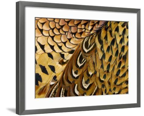 Detail of Pheasant Feathers-Jeffrey Coolidge-Framed Art Print