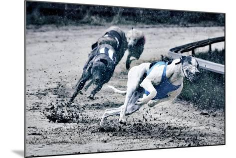 Greyhound Race-Klaus Vedfelt-Mounted Photographic Print