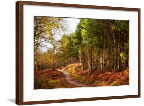 Sunlight across Trees in Cannock Chase-Verity E. Milligan-Framed Art Print