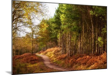 Sunlight across Trees in Cannock Chase-Verity E. Milligan-Mounted Photographic Print
