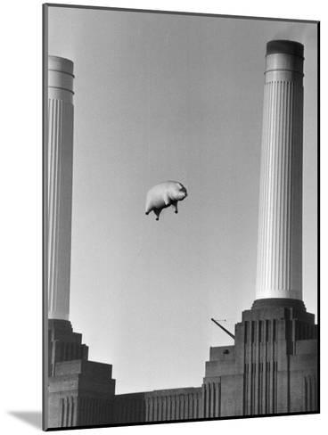 Pink Floyd's Pig-Keystone-Mounted Photographic Print