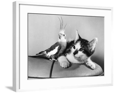 Lunch?-Henty-Framed Art Print