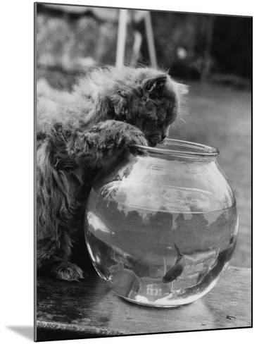 Feline Fishing-William Vanderson-Mounted Photographic Print