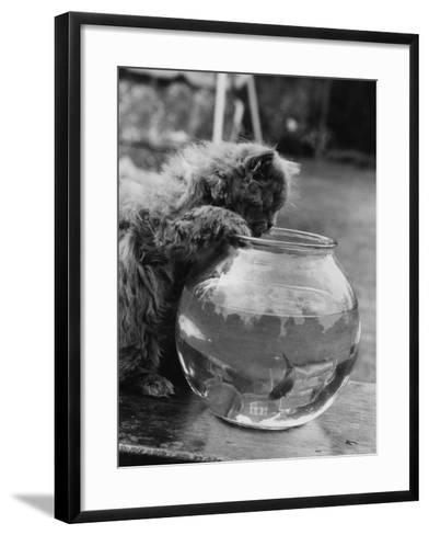 Feline Fishing-William Vanderson-Framed Art Print