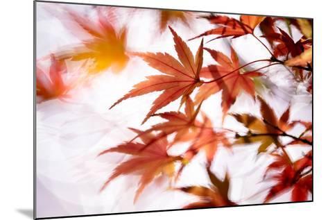 Maple-higrace photo-Mounted Photographic Print