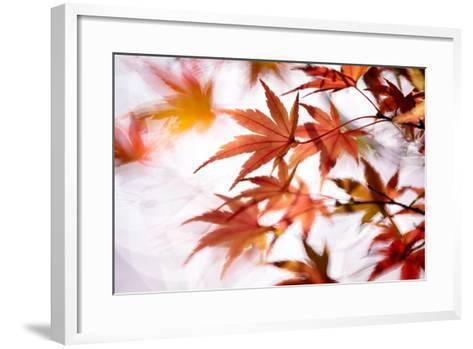 Maple-higrace photo-Framed Art Print