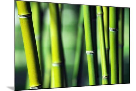 Bamboo-Joelle Icard-Mounted Photographic Print
