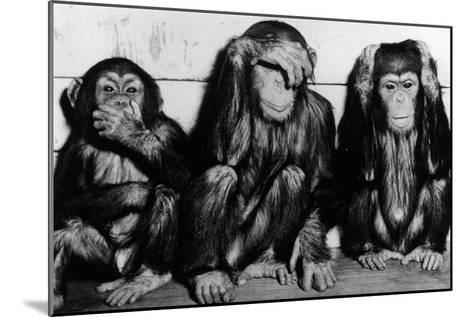 Three Wise Monkeys-Keystone-Mounted Photographic Print