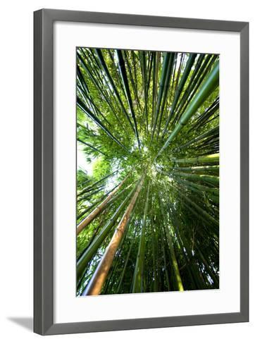 Bamboo-stevejack photos-Framed Art Print