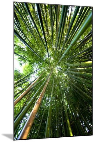 Bamboo-stevejack photos-Mounted Photographic Print