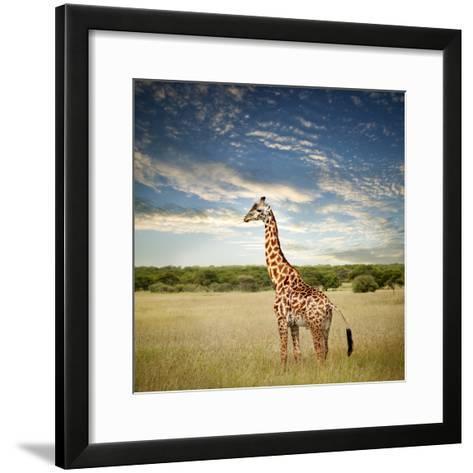 Giraffe at Serenget in National Park,Tanzania-JoSon-Framed Art Print