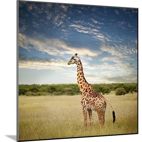 Giraffe at Serenget in National Park,Tanzania-JoSon-Mounted Photographic Print