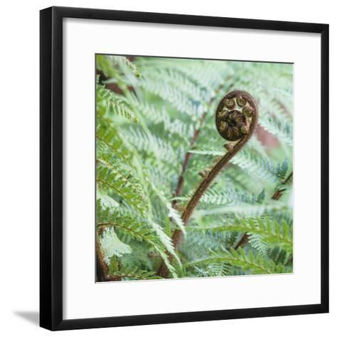 Fiddlehead on Giant Tree Fern-David Madison-Framed Art Print